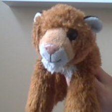 Profile photo of Savannah